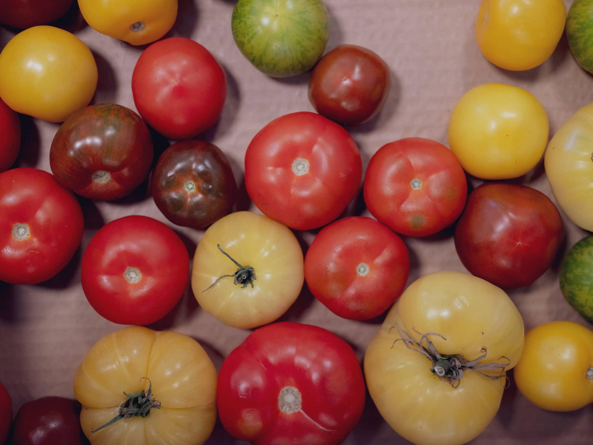 Tomater fra Finnøy